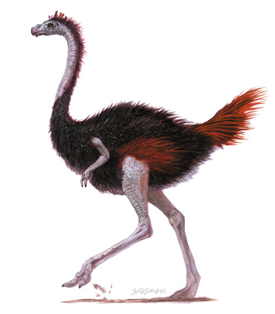 what is the relationship between a gazelle and an ostrich