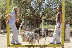 safari-ostrich-farm-white-ostrich-oudtshoorn-south-africa